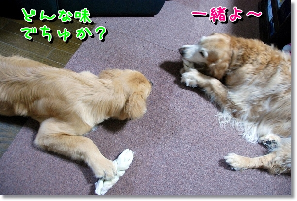 DSC_0035_20120527002132.jpg