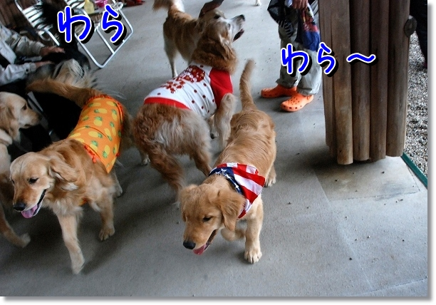 DSC_0039_20120502024114.jpg