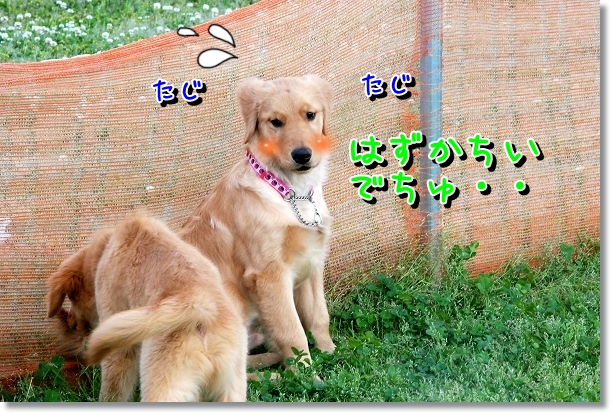 DSC_0039_20120505011611.jpg