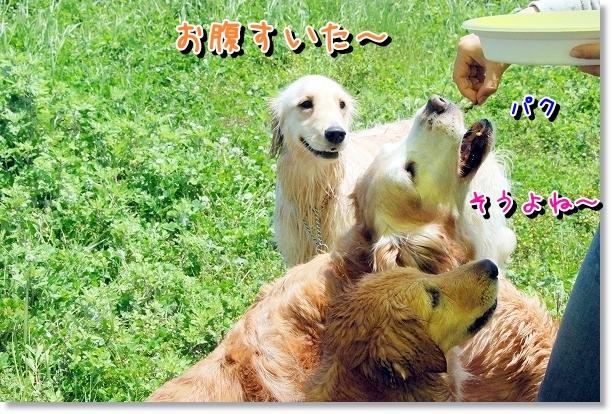 DSC_0039_20120507021559.jpg
