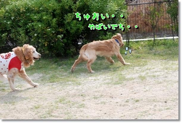 DSC_0040_20120702003354.jpg