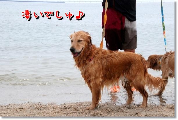 DSC_0041_20120501000749.jpg