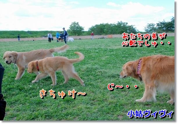DSC_0042_20120505011652.jpg