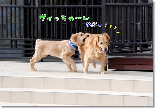 DSC_0043_20120516211612.jpg