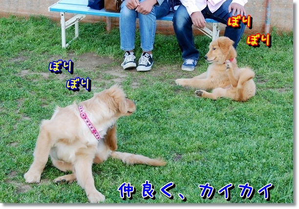 DSC_0044_20120505011651.jpg