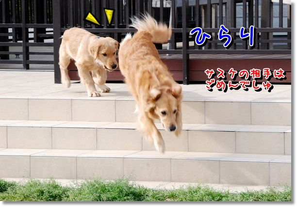 DSC_0044_20120516211611.jpg