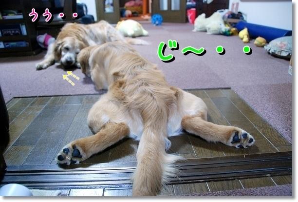 DSC_0044_20120527002209.jpg