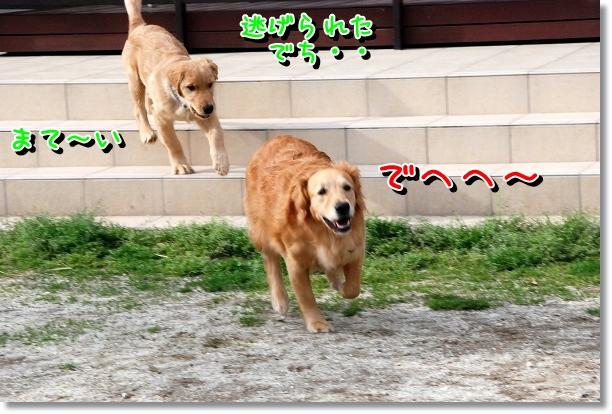 DSC_0045_20120516211610.jpg