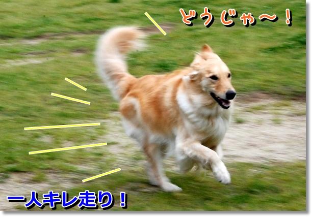 DSC_0053_20120502024111.jpg