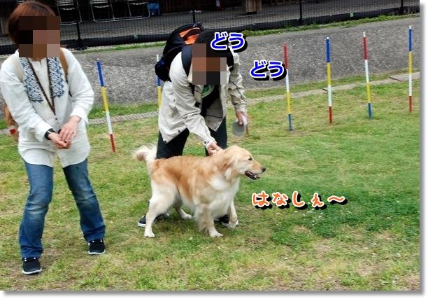 DSC_0054_20120502024204.jpg