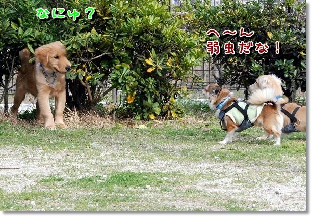 DSC_0055_20120516211646.jpg