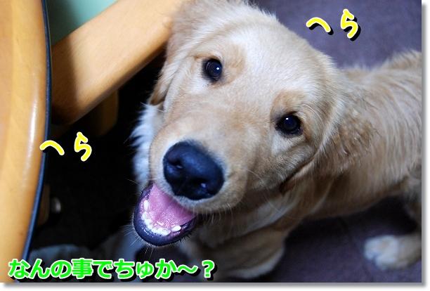 DSC_0058_20120527002320.jpg