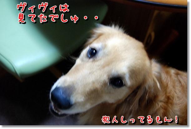 DSC_0059_20120527002319.jpg