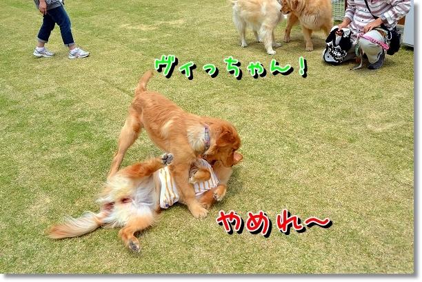 DSC_0062_20120522204124.jpg