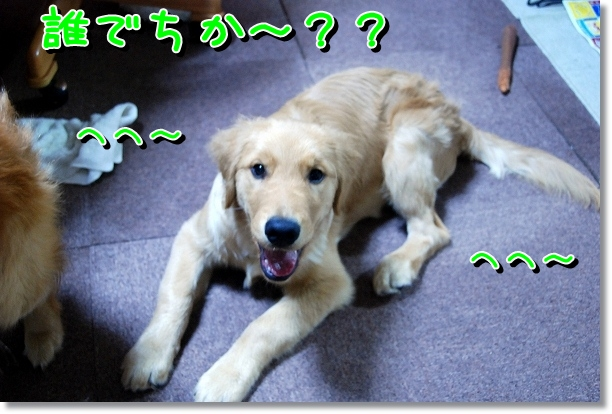 DSC_0064_20120527002318.jpg