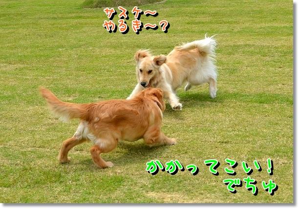 DSC_0065_20120522204123.jpg