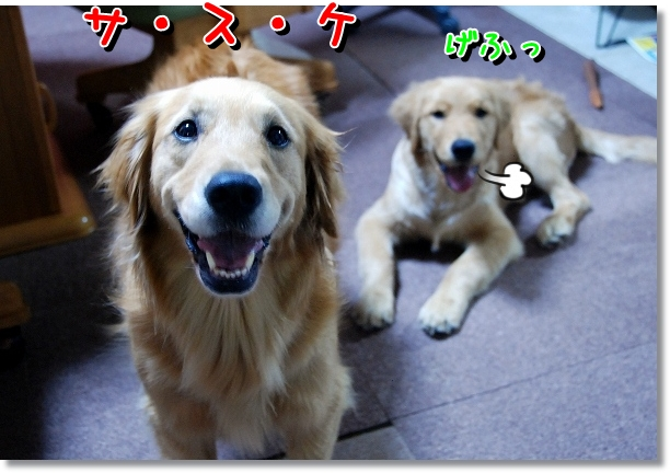 DSC_0065_20120527002316.jpg
