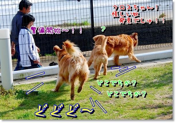 DSC_0067_20120426235110.jpg