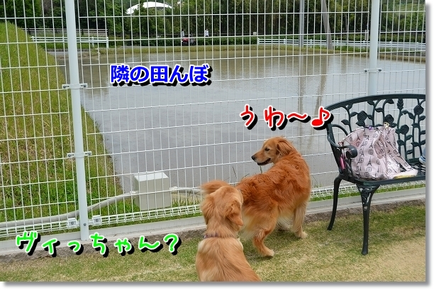 DSC_0069_20120522204121.jpg
