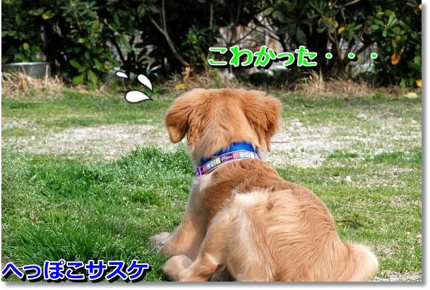 DSC_0073_20120516211748.jpg