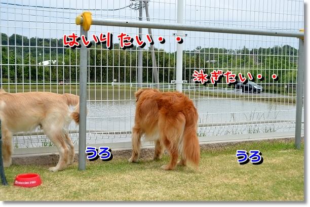 DSC_0080_20120522204201.jpg