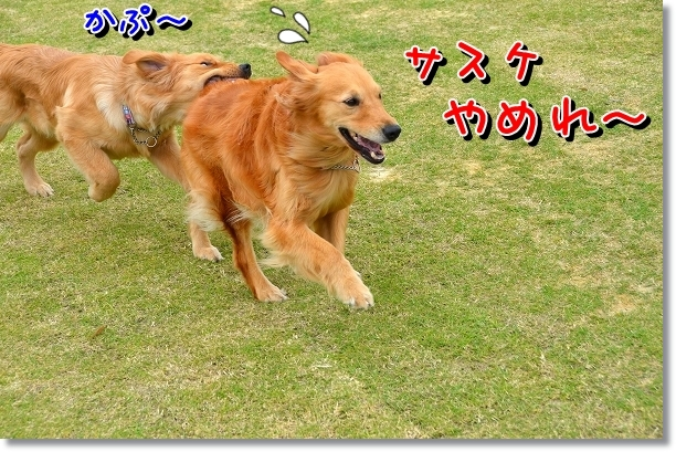 DSC_0082_20120522204159.jpg