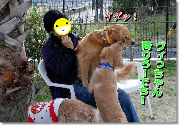 DSC_0086_20120517195210.jpg