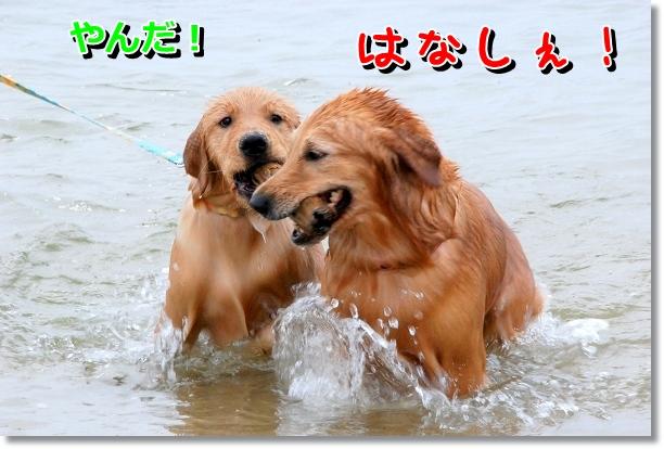 DSC_0087_20120501141132.jpg