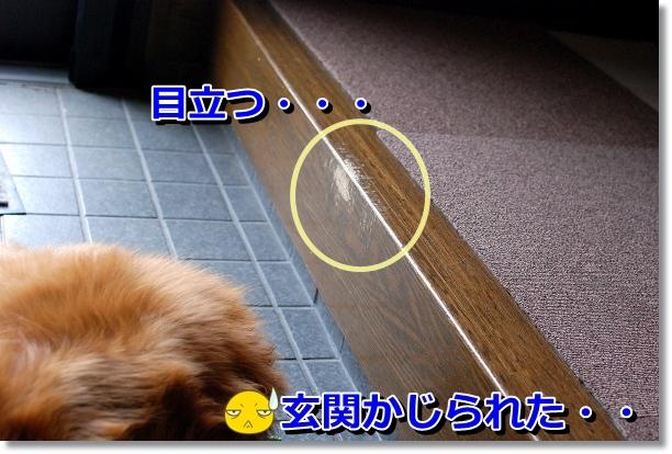 DSC_0103_20120525161208.jpg