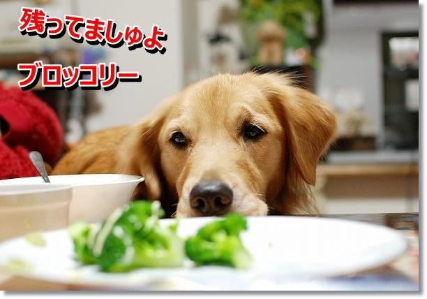 DSC_0103_20121029005746.jpg