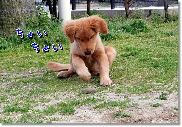 DSC_0106_20120517195241.jpg