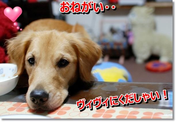 DSC_0107_20121029005745.jpg