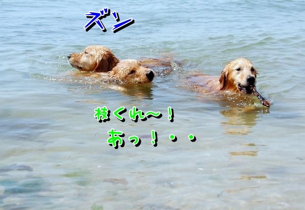 DSC_0108_20120507172108.jpg