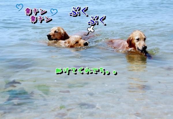 DSC_0109_20120507172107.jpg