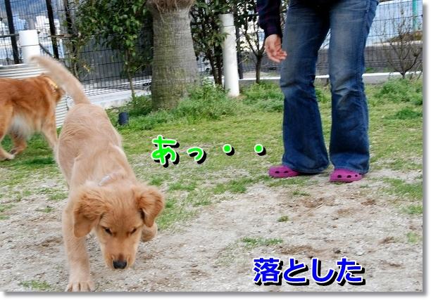 DSC_0110_20120517195317.jpg