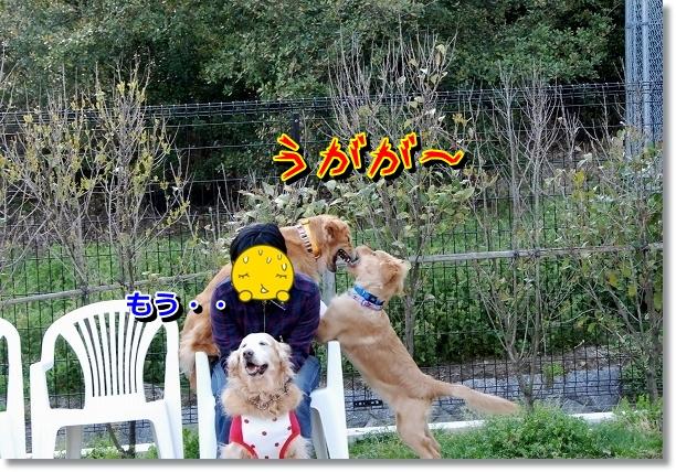 DSC_0116_20120517195316.jpg