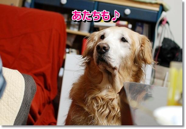 DSC_0116_20121029005744.jpg