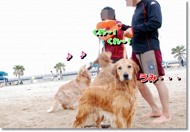 DSC_0129_20120501141212.jpg