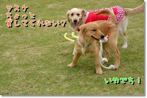 DSC_0129_20120523125916.jpg