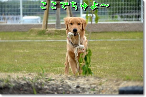 DSC_0131_20120523125914.jpg