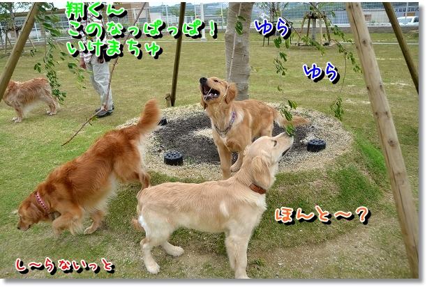 DSC_0149_20120523125948.jpg