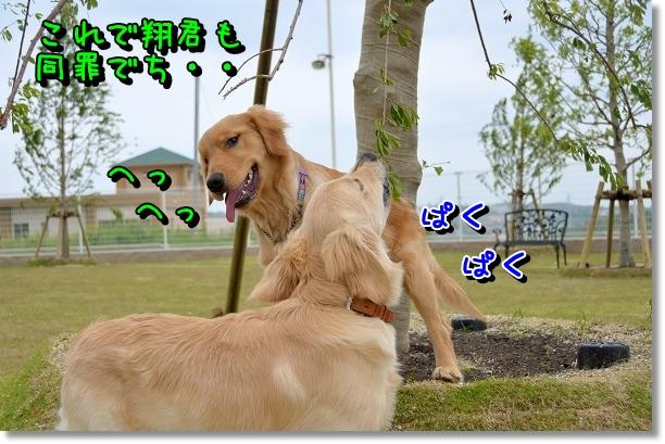 DSC_0152_20120523125946.jpg