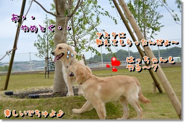DSC_0154_20120523130032.jpg