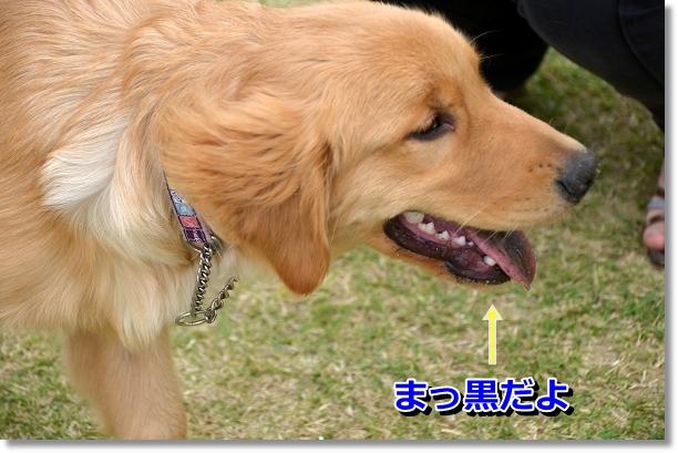 DSC_0158_20120523130030.jpg