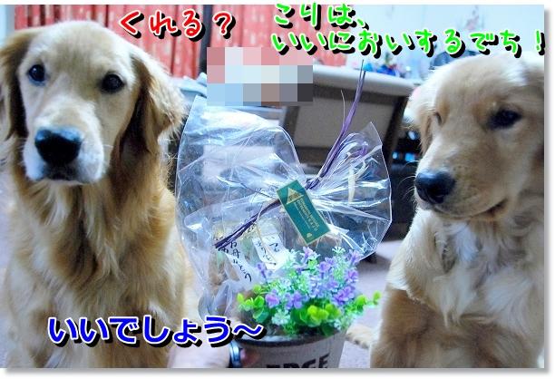 DSC_0179_20120514004428.jpg