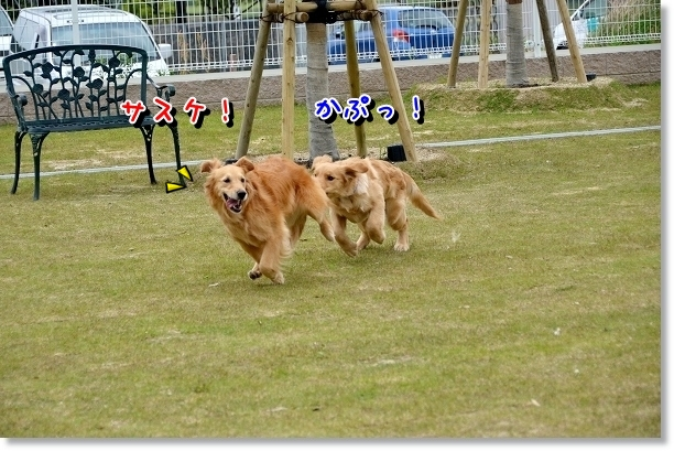DSC_0179_20120522204430.jpg