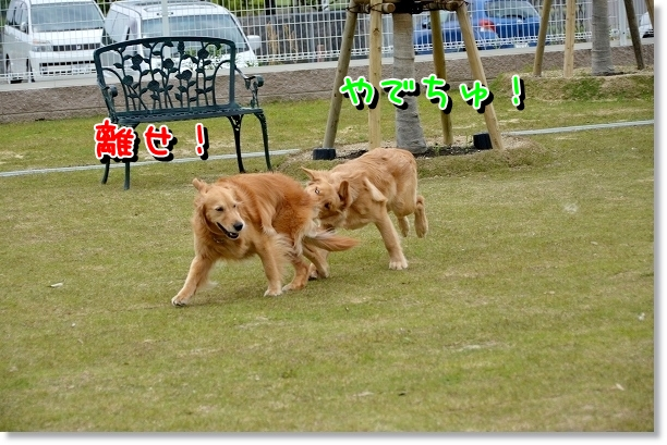 DSC_0180_20120522204429.jpg
