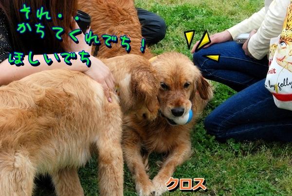 DSC_0184_20120915230555.jpg