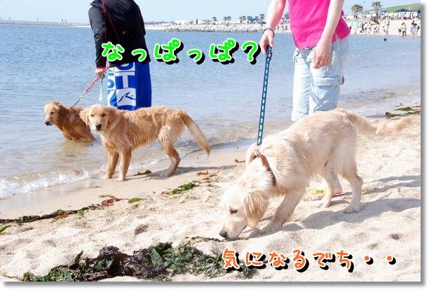 DSC_0200_20120507232108.jpg