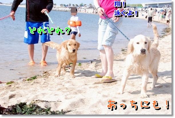 DSC_0201_20120507232108.jpg